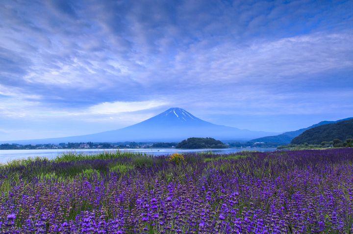 """まもなく見頃!紫の絨毯に魅了される全国の """"絶景ラベンダー畑"""" 5選"""