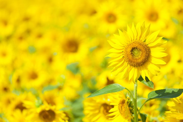 忘れられない夏にしない?この夏後悔したくないあなたに贈る「夏にしたいこと」10選
