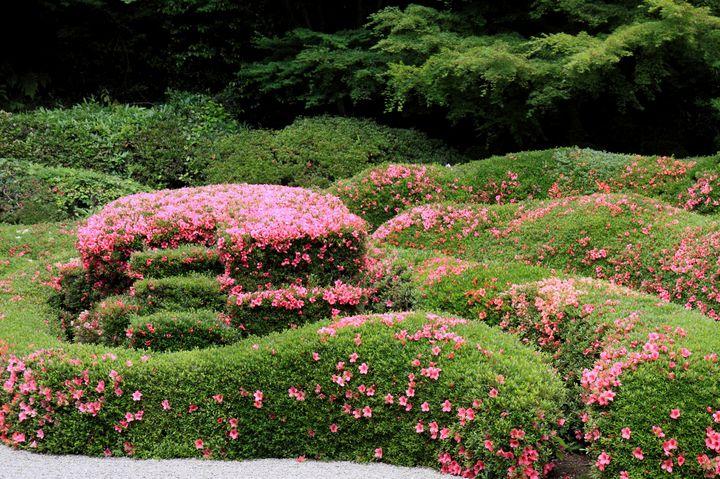 ピンクが彩る庭園!滋賀・蓬莱庭園が見惚れるほど美しすぎると話題