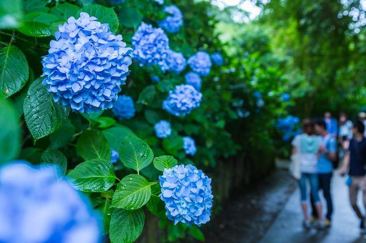 雨だからこそ楽しめる!梅雨の時期に人気な京都のおすすめスポット5選