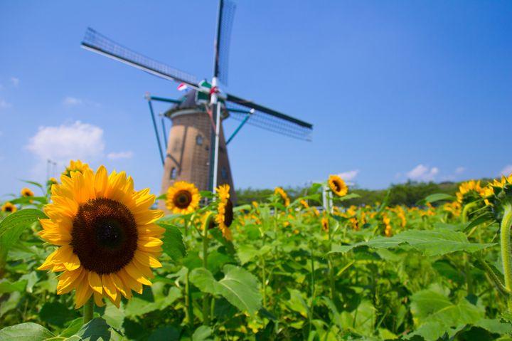 """美しい花々を更に引き立てる!日本全国の""""花畑×◯◯""""の絶景5選"""