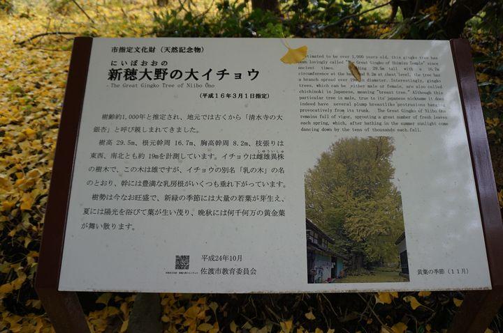 樹齢約1000年と推定され、地元では古くから「清水寺の大銀杏」と呼び親しまれてきました。