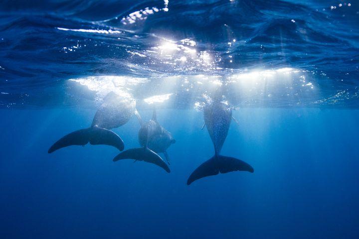 人生で一度は行きたい!中米の楽園バハマの絶景「キャベッジビーチ」とは