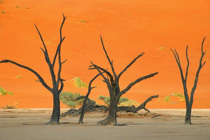 CGではないんです!まるで絵画のような世界最古の砂漠「ナミブ砂漠」とは