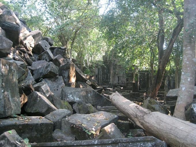 倒れている木もあります。