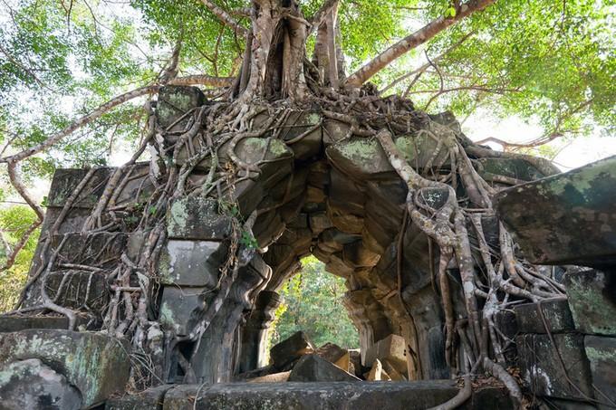 木の根が絡み付いています。
