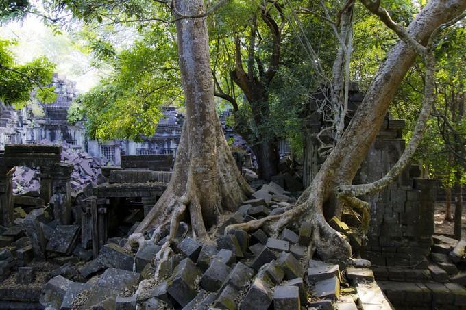 小石に木が絡まってすごいバランス感覚です!