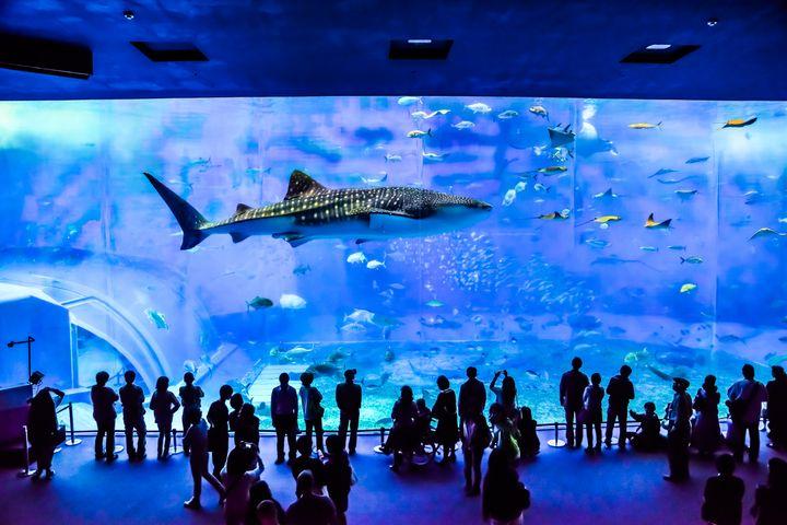 """一生に一度は行ってみたい!日本全国の""""息をのむほど美しい""""水族館10選"""
