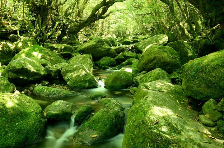 もののけ姫の世界がここに。美しき屋久島の絶景「白谷雲水峡」とは