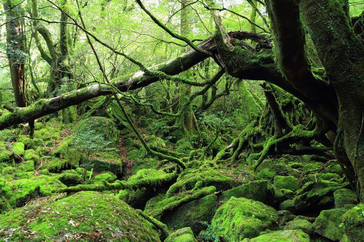 鹿児島で行くならここ!鹿児島県で行かないと損する観光地TOP40