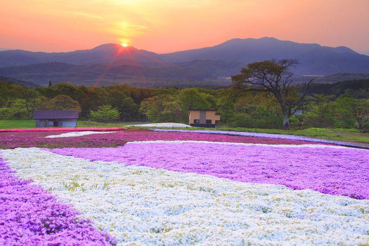 秋を先取り!この秋行きたい日本全国のフォトジェニックな「コスモス畑」10選