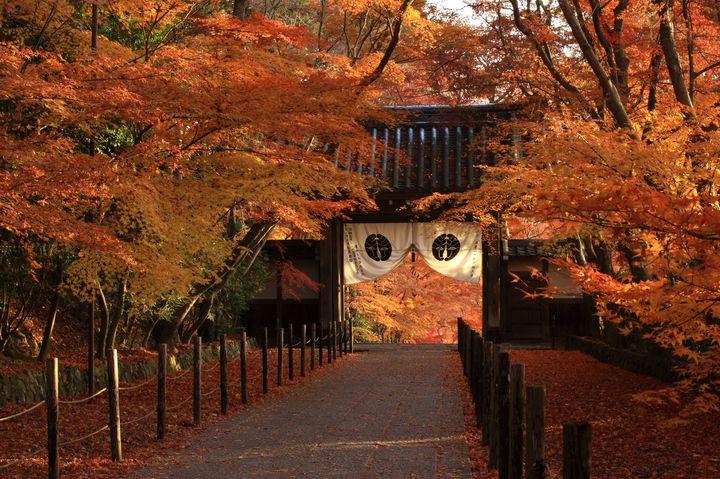 """京都にある""""モミジの寺""""!CMでもお馴染みの紅葉の名所「光明寺」に行こう"""
