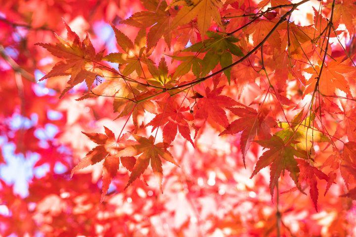 広尾でおしゃれに秋を感じる!超穴場紅葉スポット「有栖川宮記念公園」とは