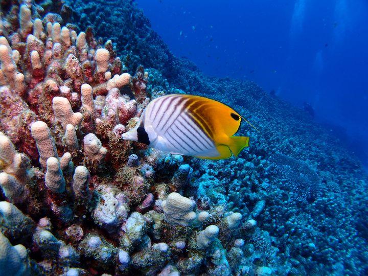 タイの隠れた美しい離島!口コミ人気急上昇中の『コーラル島』とは
