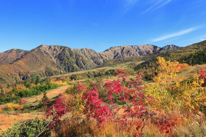 山に広がる紅葉の絨毯!立山・弥陀ヶ原の彩り鮮やかな紅葉が美しすぎる《富山県》