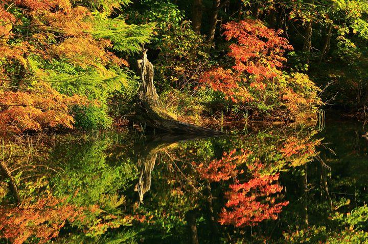 岩手県人気No.1の紅葉の名所!「八幡平」が秋のドライブに最適な理由
