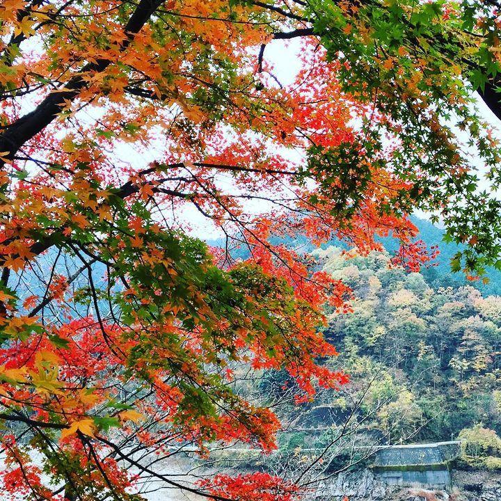 サイクリングにもおすすめ!この秋見るべき埼玉「名栗湖」の紅葉