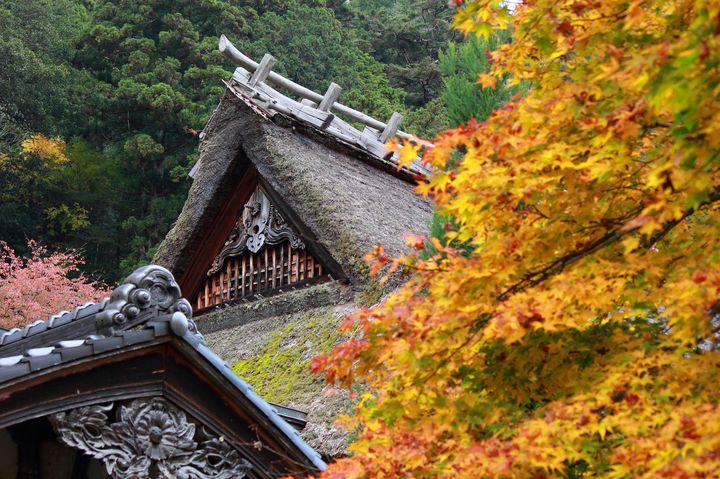 """情緒溢れる、京都の秋。京都""""常照皇寺""""の紅葉が美しすぎると話題"""
