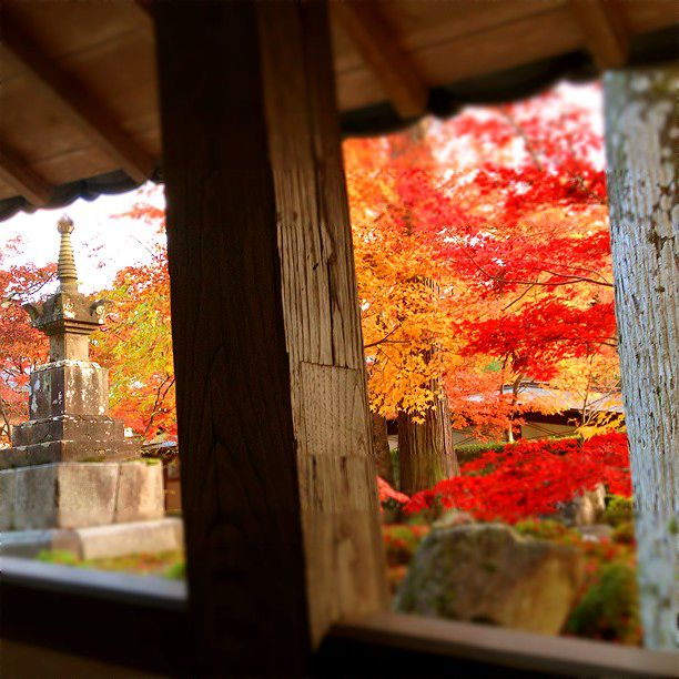 紅葉に囲まれる美しさに感動!滋賀県「永源寺」を彩る美しい紅葉の魅力とは