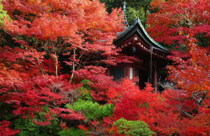 """京都の紅葉穴場スポット!""""山科毘沙門堂""""の紅葉が美しすぎる"""
