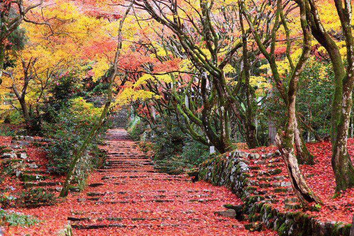 """ここだけの、特別な秋。滋賀県の""""人気紅葉スポット""""ランキングTOP10"""