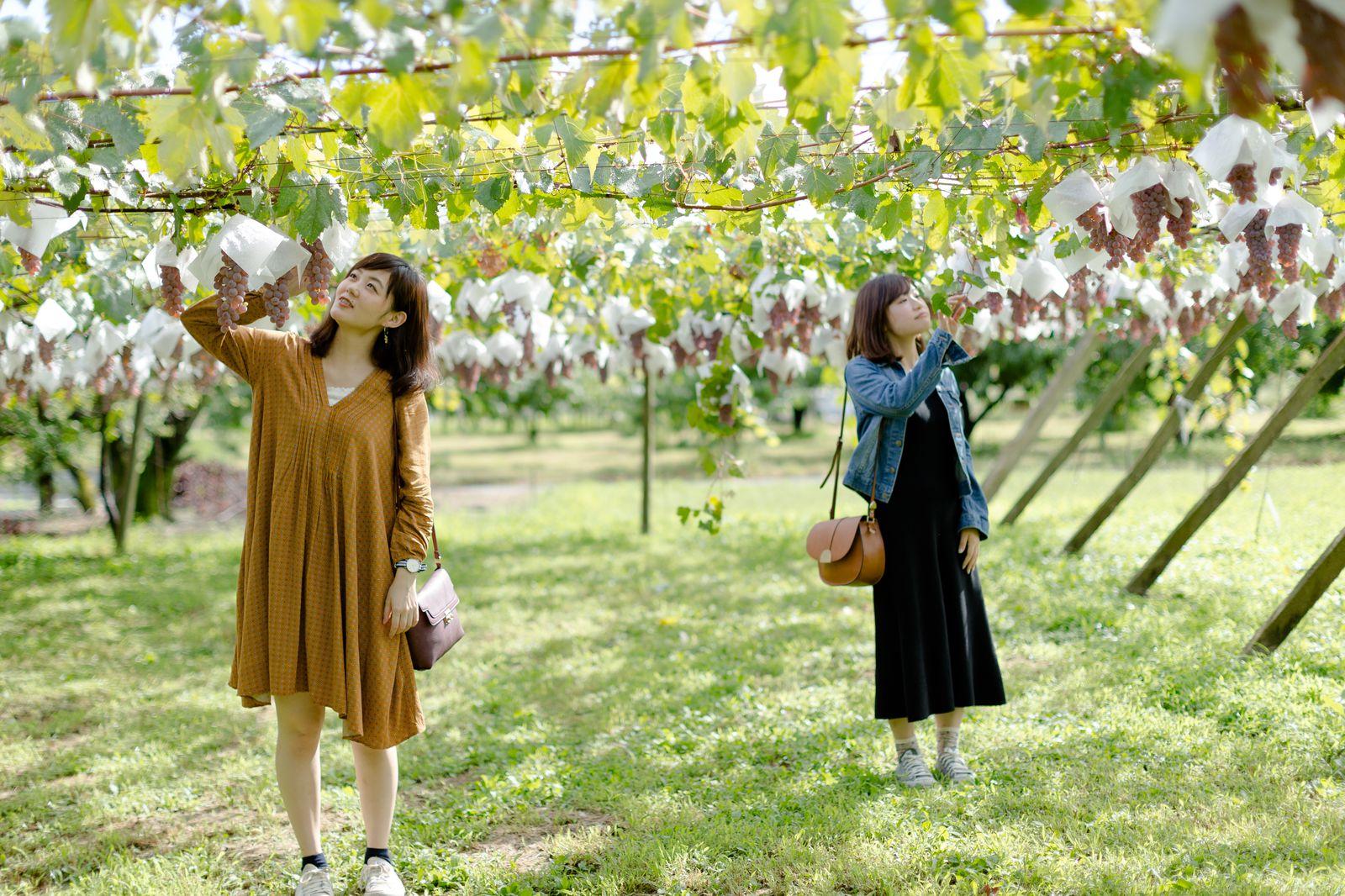 続けてご紹介するのは、JR中央本線・勝沼ぶどう郷駅からタクシーで約10分のところにある「白百合醸造(ロリアンワイン)」。今年開催された「日本ワインコンクール2016」で8種類ものワインが賞を獲得した国内でも有数のワイナリーの一つです。