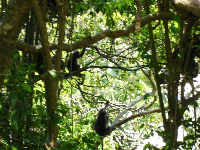 ココナッツの収穫のため島に働く猿たちのショーが愉快なモンキーセンター