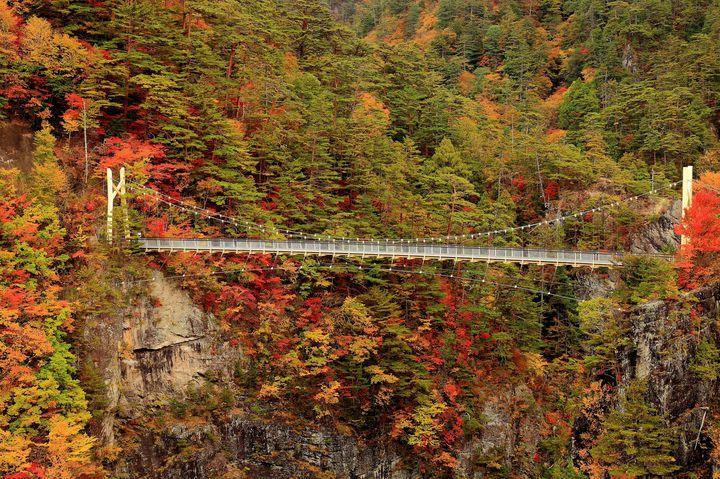 吊り橋から最高の紅葉を眺めよう!岐阜県の「多良峡」が美しすぎる