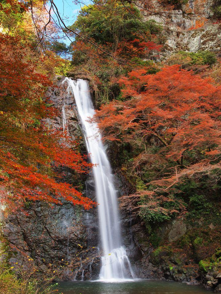 """大阪で紅葉狩りするならココ!知る人ぞ知る紅葉の名所""""西江寺""""のモミジが美しい"""