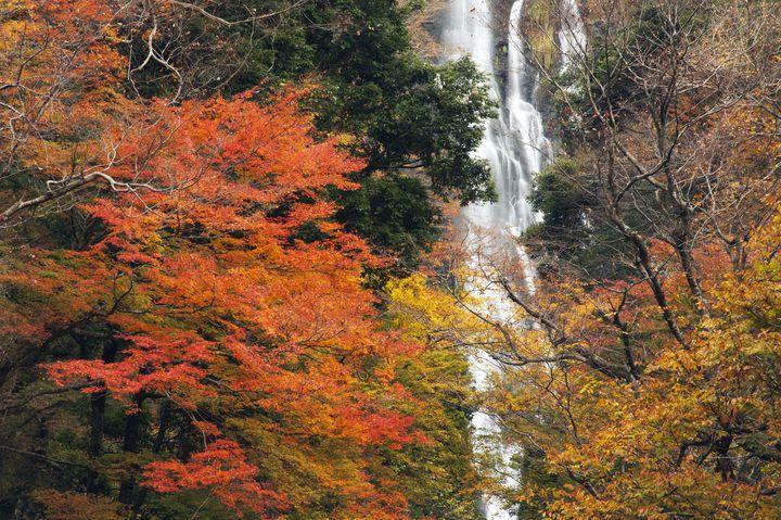 紅葉の名所が盛りだくさん!今年行きたい岡山のオススメ紅葉スポット10選