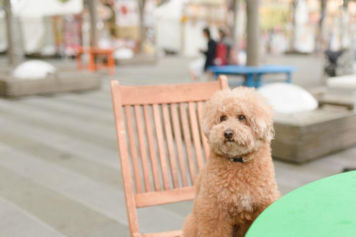 """愛犬と一緒に楽しくランチ!東京都内の""""ペット同伴可""""おしゃれカフェ7選"""