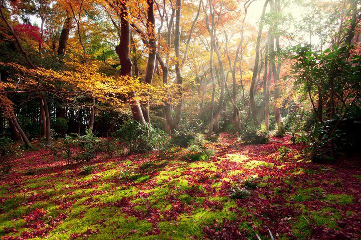 """秋を彩る美しき""""赤の絨毯""""。京都「祇王寺」の紅葉が絶景すぎる"""