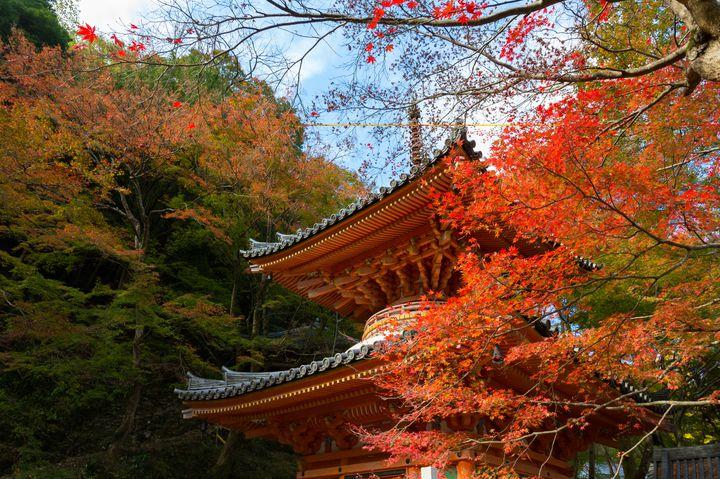 """大阪ナンバーワン?""""牛滝山・大威徳寺""""の紅葉が綺麗すぎる"""