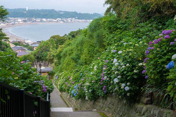 【鎌倉のおすすめ観光40選】古き良き文化を堪能する人気スポットランキング