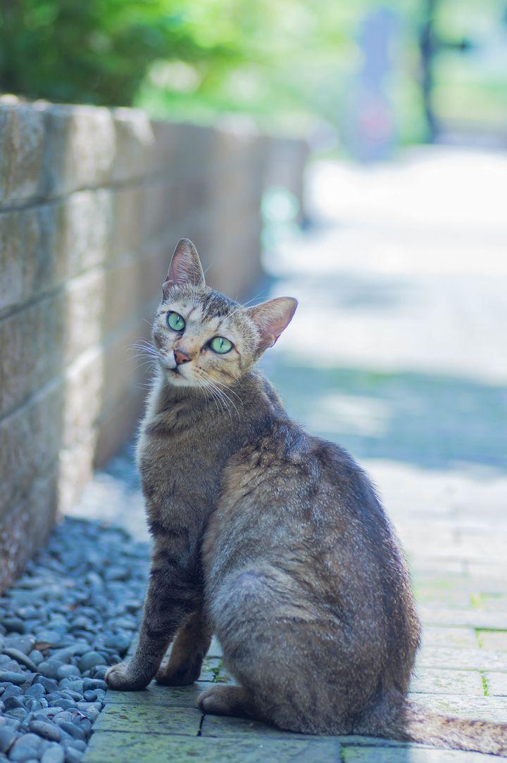 恩返し の ジブリ 猫