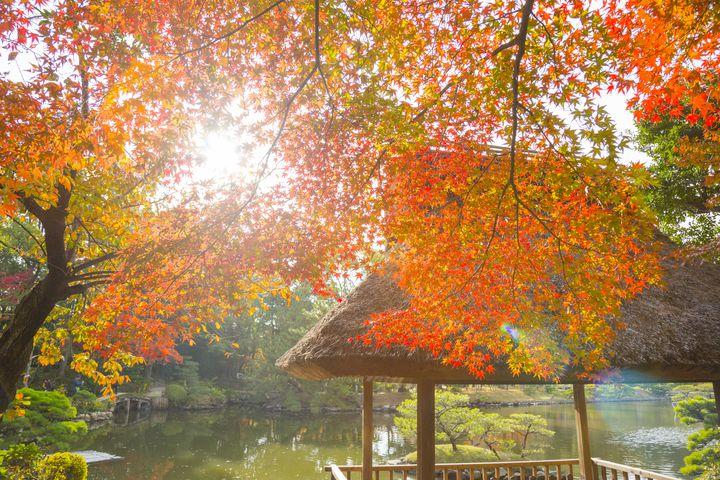 """旅日和の季節がやってきた。""""秋の大人ひとり旅""""で行きたい国内旅行先10選"""