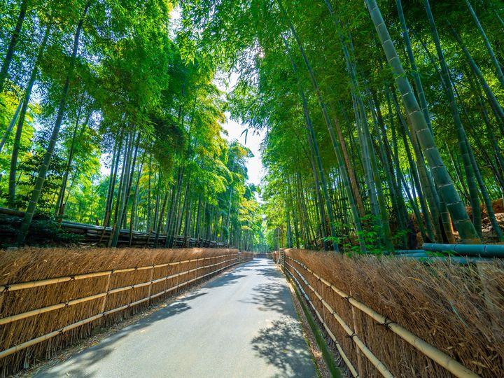 西日本で一番小さい市はここ!京都・向日市のおすすめお散歩スポット5選