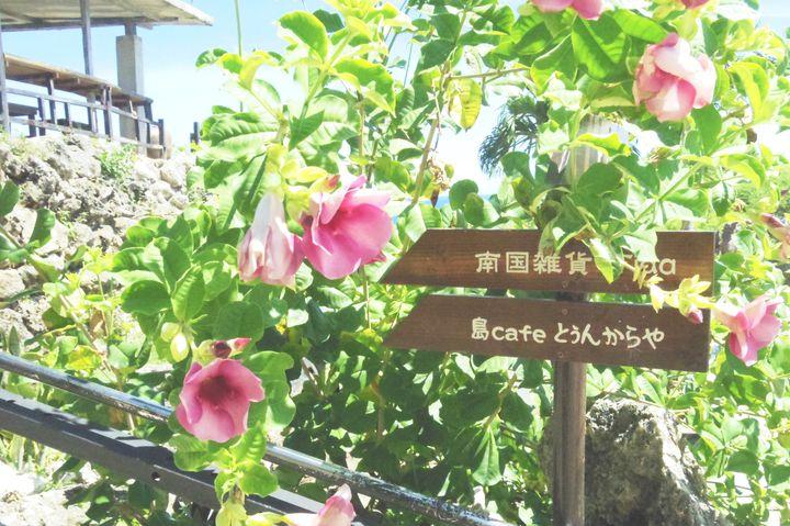 ゆったりくつろげる!宮古島でおすすめのカフェ厳選7選