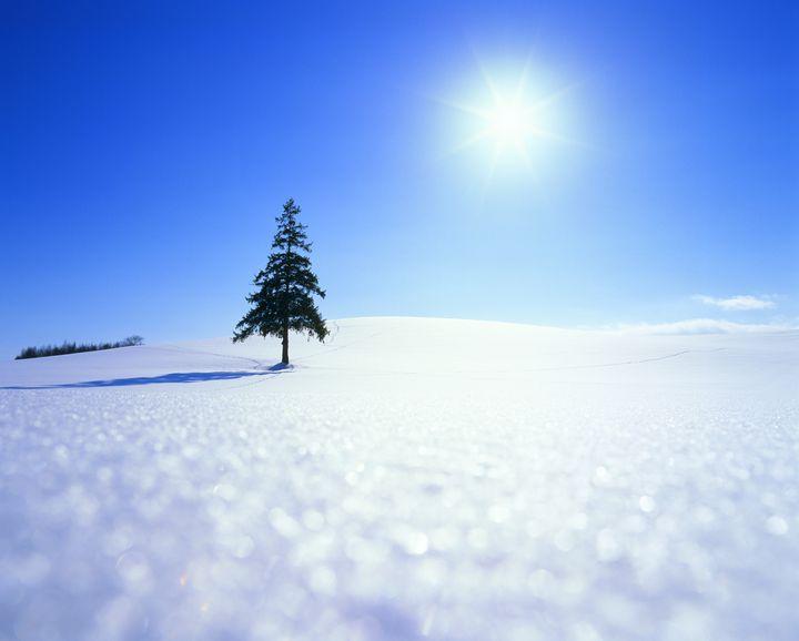 一度は行きたい穴場絶景スポット!銀世界の中に佇む「クリスマスツリーの木」とは