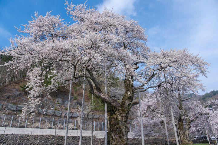 鎌倉時代の荘厳な建造物と絶景が一度に鑑賞できる、照蓮寺 福来博士記念館!