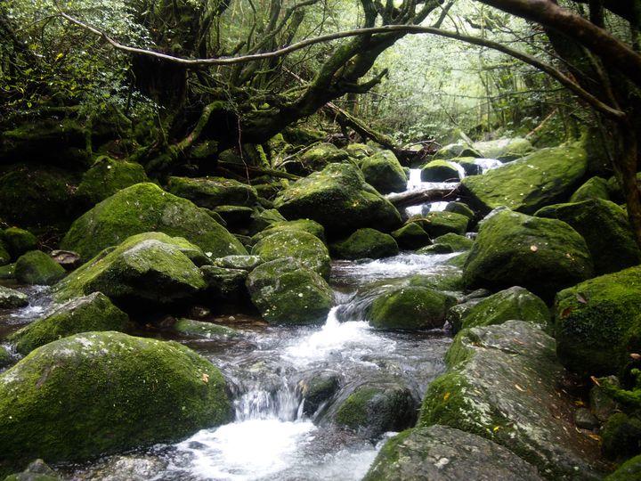 神秘の島、屋久島に呼ばれたことありますか?