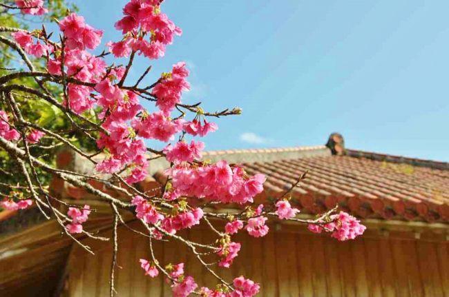 【終了】一足早く春を感じる!JALプライベートリゾートオクマで「花風キャンペーン」開催