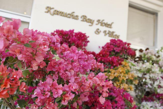 【終了】ひとあし早い春の祭典!沖縄・カヌチャリゾートで「花庭フェスタ」開催