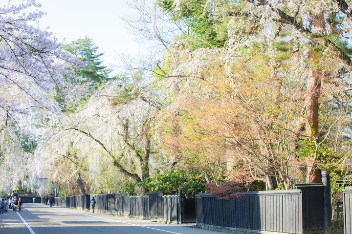 あの俳優の告白シーンで話題!みちのくの小京都「角館」の桜が綺麗すぎる