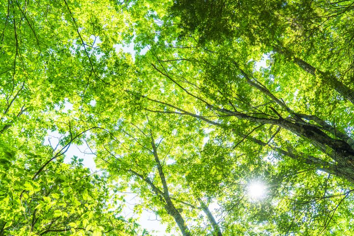 都会のオアシスを巡ろう。東京都内の自然と触れ合える癒しスポット7選