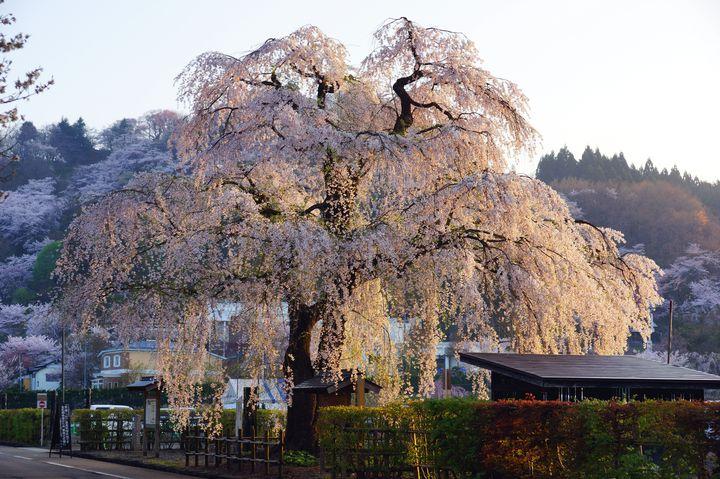 """この春、旅行するならココ!みちのくの小京都""""角館""""に行くべき7の理由"""