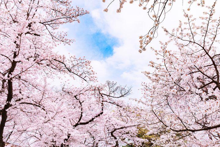 """満足度120%以上!上野で楽しむ""""春デート""""1日デートプランはこれだ"""
