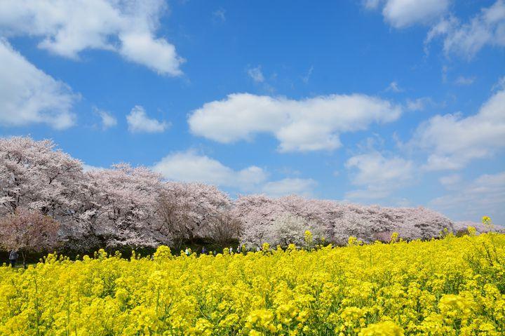 今!今しか見られない!日本国内のカメラを持って行きたい春の絶景7選
