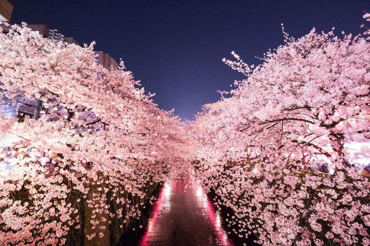 お花見だけじゃない!春に行きたい東京都内のデート&おでかけスポット10選