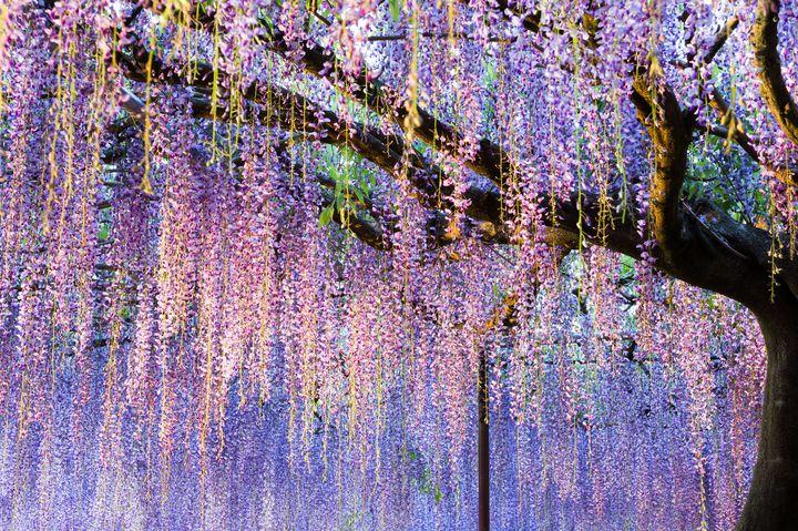 """穴場から名所まで!関西地方で絶対行きたい""""春の観光・おでかけスポット""""20選"""